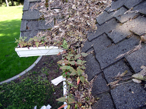 PRO-FLO SEAMLESS GUTTERS LTD. - Gutter And Downspout Cleaning